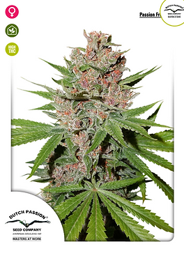Passion Fruit Feminised Seeds from Dutch Passion