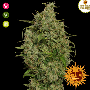 Sweet Tooth Feminised Seeds from Barney's Farm Seeds