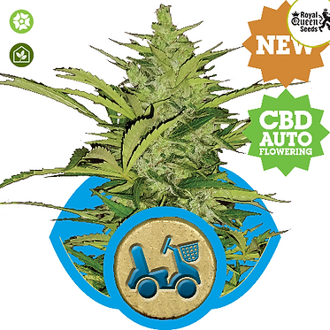 Fast Eddy Auto Feminised Seeds from Royal Queen Seeds