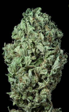 Sour Diesel Auto Feminised Seeds from Dinafem Seeds