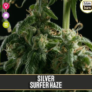 Silver Surfer Haze Feminised Seeds from BlimBurn Seeds