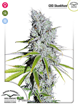 Skunk Haze CBD Feminised Seeds from Dutch Passion