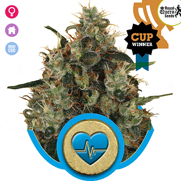 Medical Mass CBD Feminised Seeds from Royal Queen Seeds