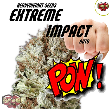Extreme Impact Auto Feminised Seeds from Heavyweight Seeds
