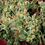 Thumbnail: 2046 Feminised Seeds from Medical Seeds