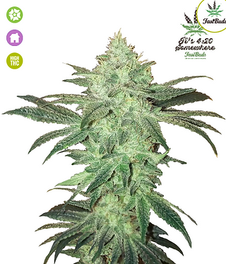 Stardawg Auto Feminised Seeds from FastBuds Seeds