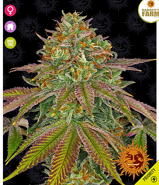 Wedding Cake Feminised Seeds from Barney`s Farm Seeds