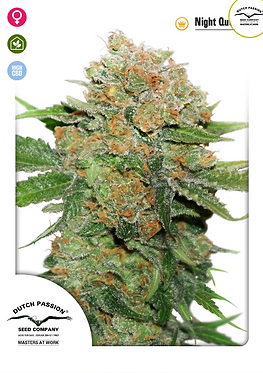 Night Queen Feminised Seeds from Dutch Passion