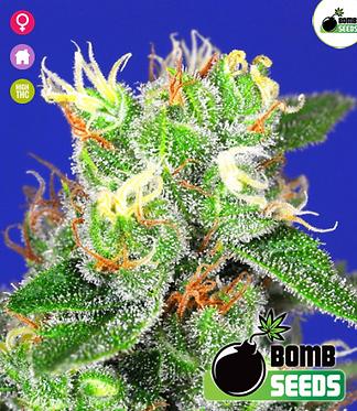 Medi Bomb #2 Feminised Seeds from Bomb Seeds