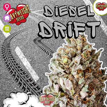Diesel Drift Feminised Seeds from Heavyweight Seeds