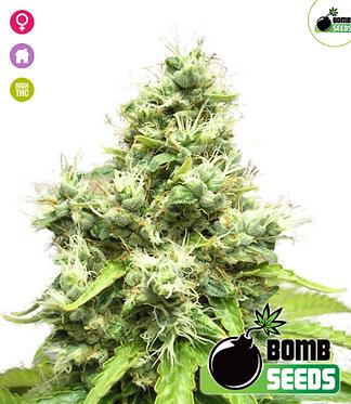 Medi Bomb #1 Feminised Seeds from Bomb Seeds
