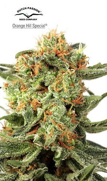 Orange Hill Special Feminised Seeds from Dutch Passion