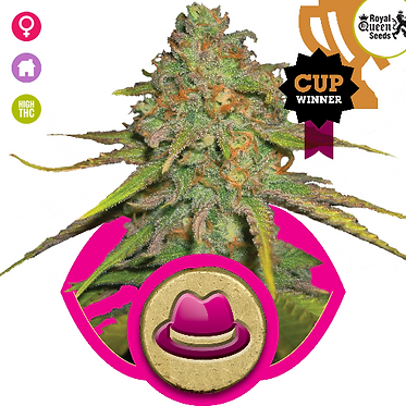 O.G. Kush Feminised Seeds from Royal Queen Seeds