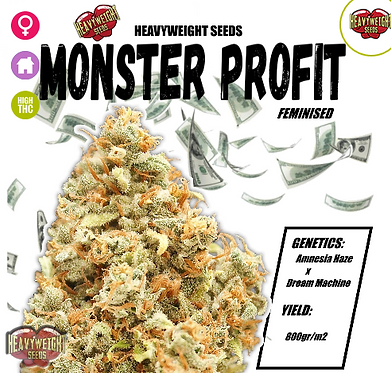 Monster Profit Feminised Seeds from Heavyweight Seeds