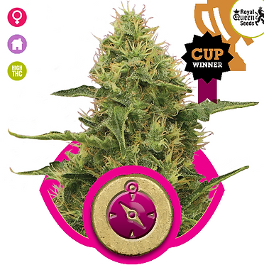 Northern Light Feminised Seeds from Royal Queen Seeds