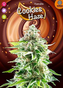 Cookies Haze Feminised Seeds from Kannabia