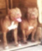 ❤ Em Família ❤__😍 Tambor and Leonora 😍