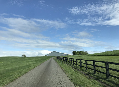 緑と青空の最高のロケーションを堪能。そしてさくらの家は基礎工事中。