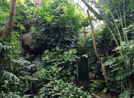 ジャングル!真岡の井頭公園にこんなところが!