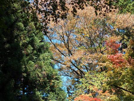 林の中にそっと佇む。「kokage」竣工写真UPしました。