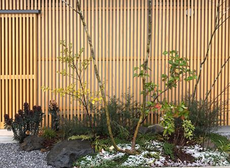 春の雪化粧での見学会-小金井の家。