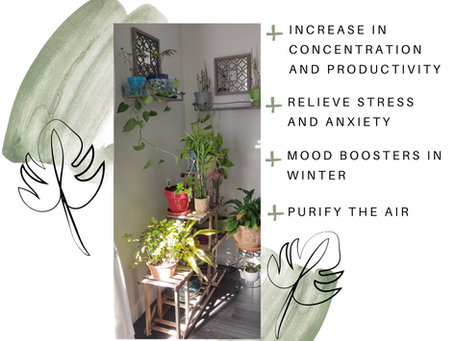 Do you have Indoor Plants?