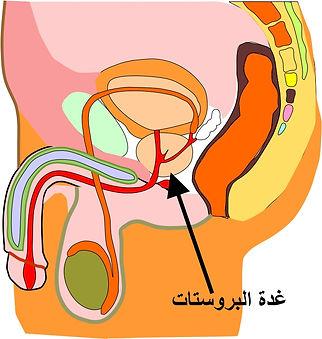 prostate2.jpg