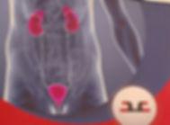 Urology.jpg