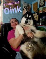 Dana Gaulin & Ava Fox 301 & Oink.jpg