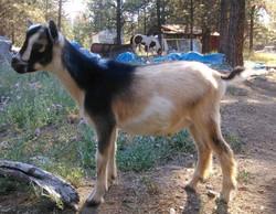 Tonka at 3.5 months