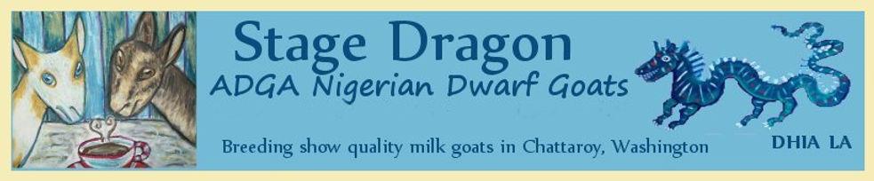 Nigerian Dwarf Breeder in Chattaroy, WA ADGA Registered