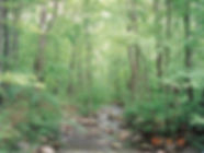 West Virginia Pure Spring Water