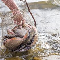 senior-man-is-fishing-at-a-lake-XK7U2HC.