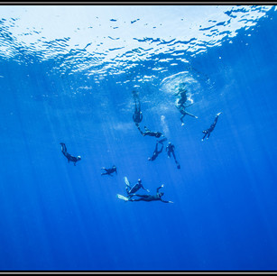 Plongée et apnée - ile Réunion