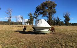 Australian made cattle feeder