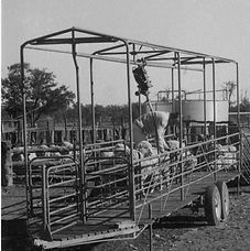 Free Range Cattle Feeder