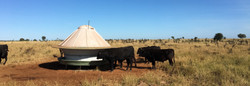 EASY TO MAINTAIN CATTLE FEEDER