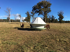 Australian made cattle feeders