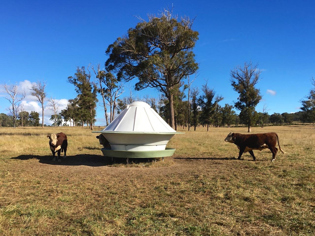 Round poly cattle feeder