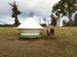 Round cattle feeder is durable