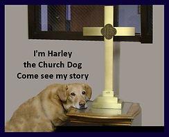 1 Harley the Church Dog3.jpg