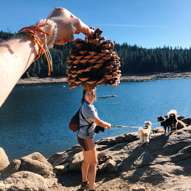 Pinecrest Hike