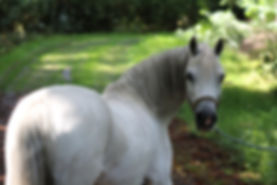 pony-2578108_1920.jpg