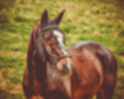 horse-3604162_1920.jpg