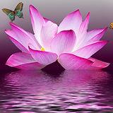 butterfly-1164493_1280.jpg