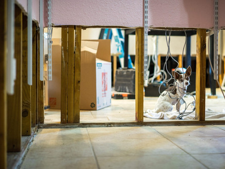 The Process of Water Damage Remediation
