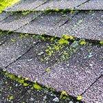 Algae-on-atlanta-Roof.jpg