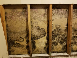 Interesting Facts About Mold