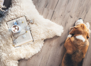Pet Friendly Flooring Solutions