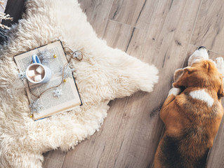 Pet Friendly Flooring Solutions